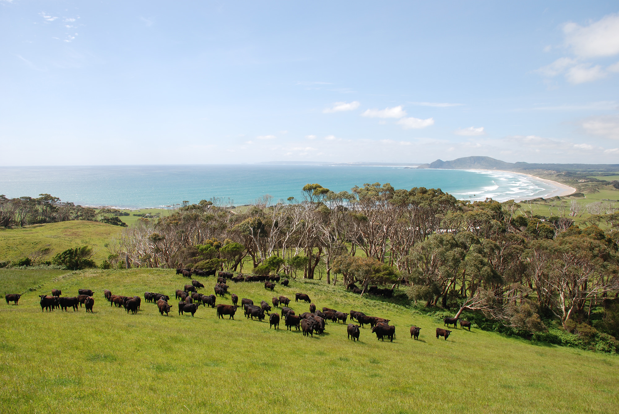 Greenham, the business behind brands like Cape Grim, follows the Australian Beef Sustainability Framework's definition of sustainability throughout its operations.