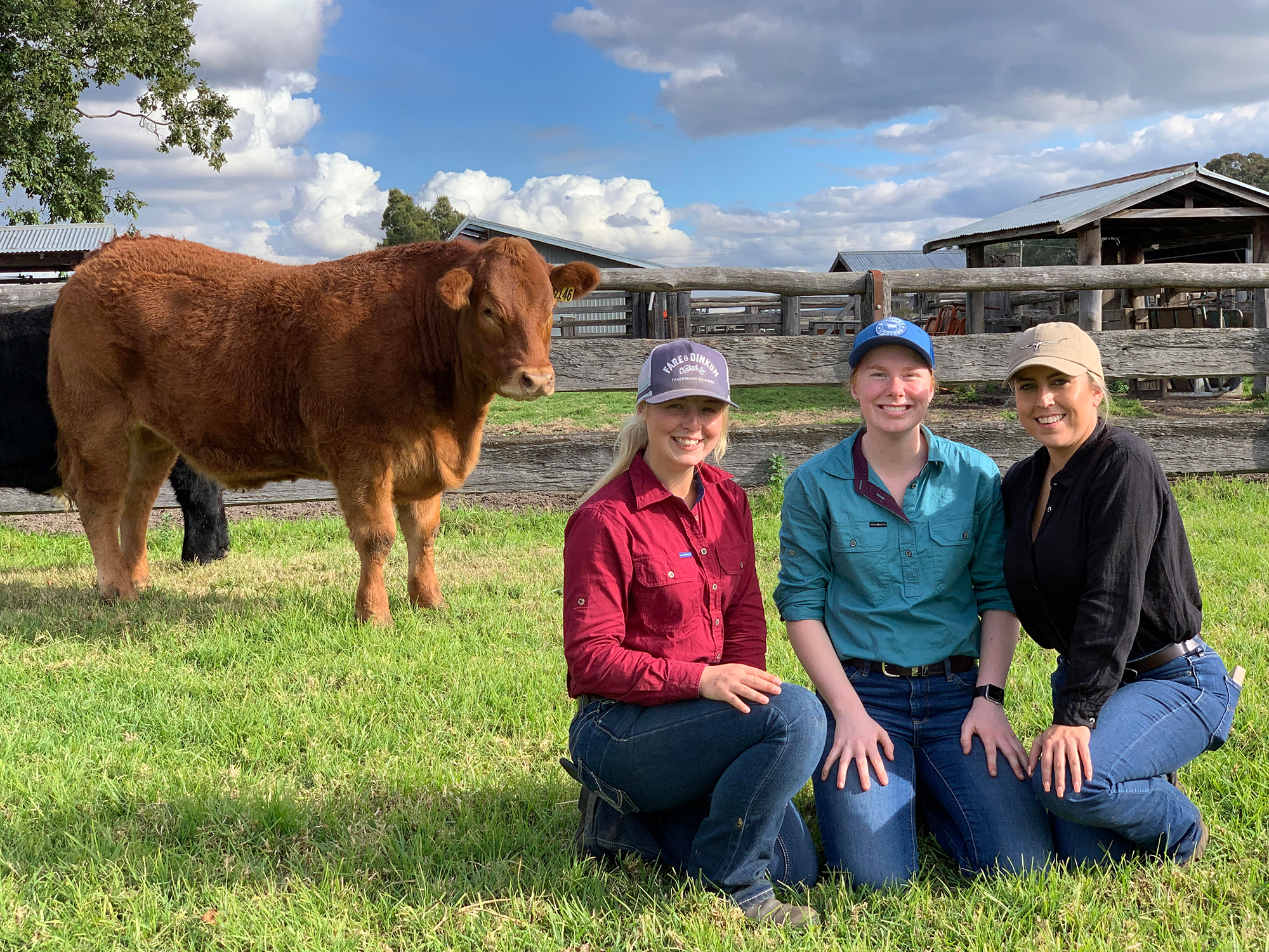 Farm Management students with a Limousin steer at Western Sydney University Hawkesbury Campus.